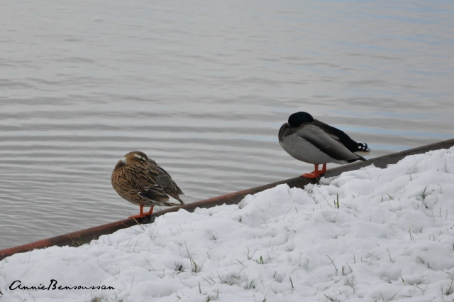snow in  the netherland 6
