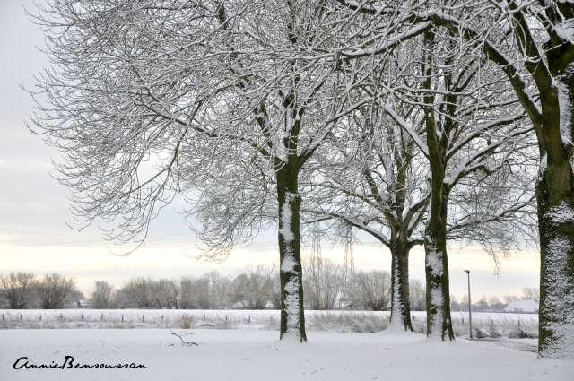 snow in the Netherlands 4